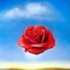 dali rose