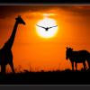 Tablou african sunset
