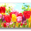 Tablou colorful tulips, Printly