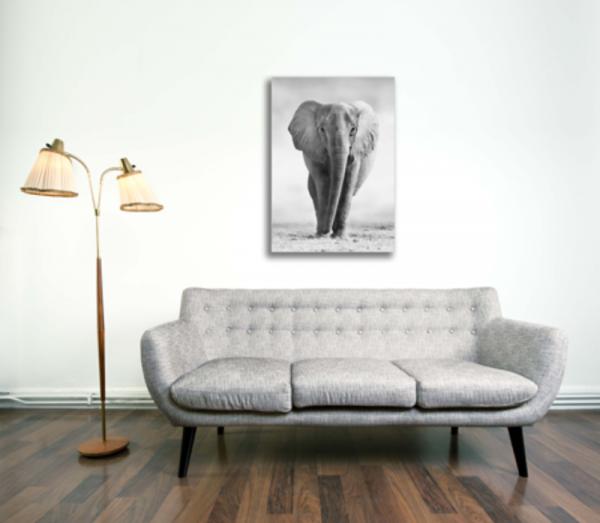 Tablou elefant african