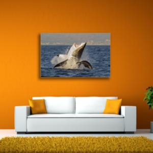 Tablou rechin alb