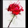 Tablou red rose, Printly