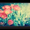 Tablou retro style poppies, Printly