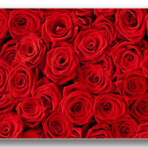 Tablou roses background, Printly
