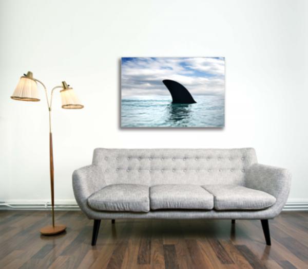 Tablou shark fin