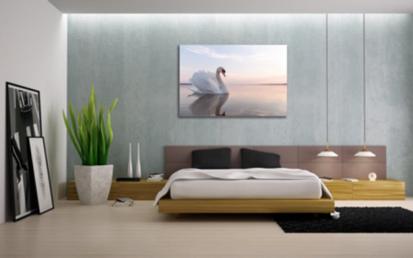 Tablou swan on blue lake