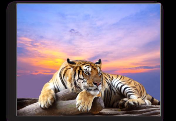 Tablou tigru siberian