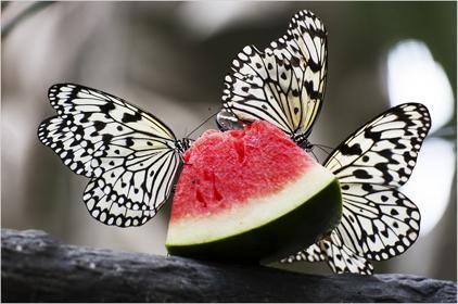 Tablou butterfly