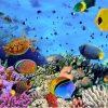 Tablou colonie de corali