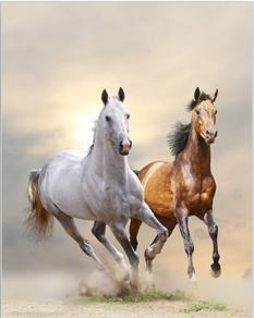 Tablou horses in dust