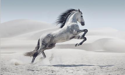 Tablou white horse