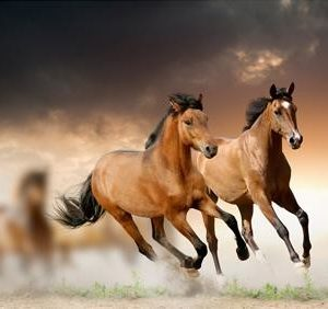 Tablou horses in sunset 2