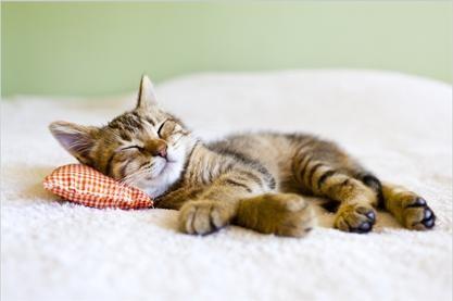 Tablou cute kitty