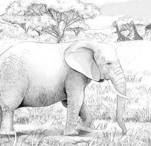 Tablou safari