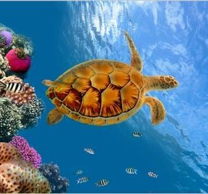 Tablou sea turtle