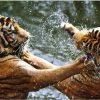 Tablou fighting tigers