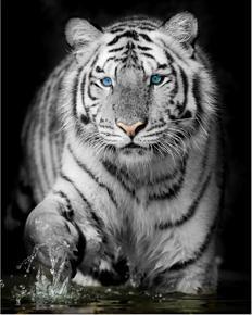 Tablou white tiger