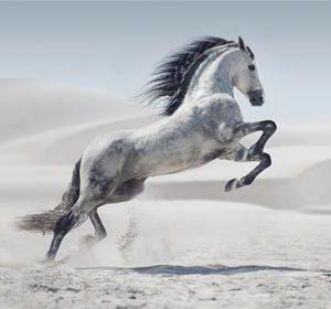 Tablou wild horse